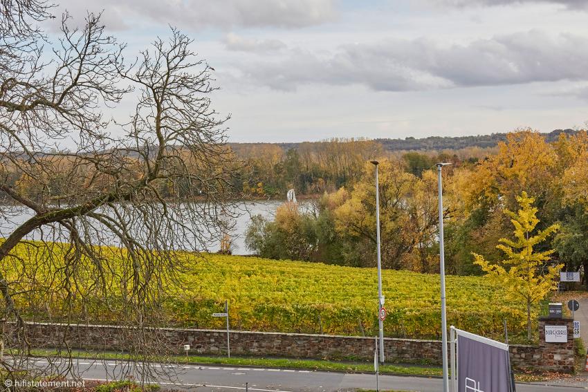 Der Blick von einem der Balkone geht über Weinreben zum Rhein und zur darin gelegenen Insel